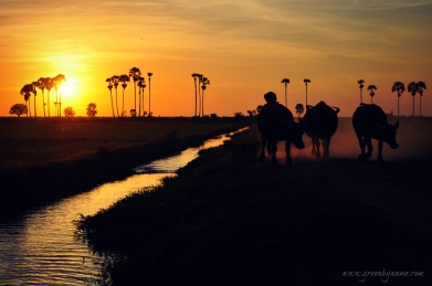Rest ~ Join me on Discovery Tour of Cambodia