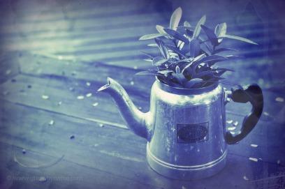 cyanotypekettleplantrgCR