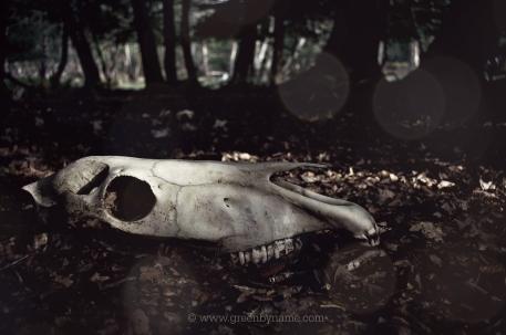 'Resting skull I'