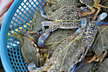 Blue Crabs of Teuk Chhou River